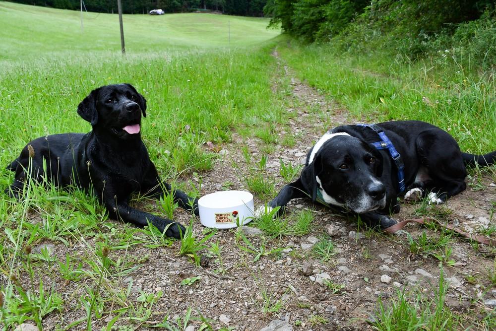 Hunde mit Napf auf Feldweg im Kinzigtal
